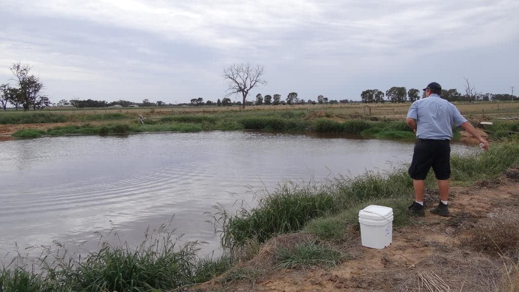 Bacterial agent Dam Buster gets rid of sludge and chemicals from farm dams