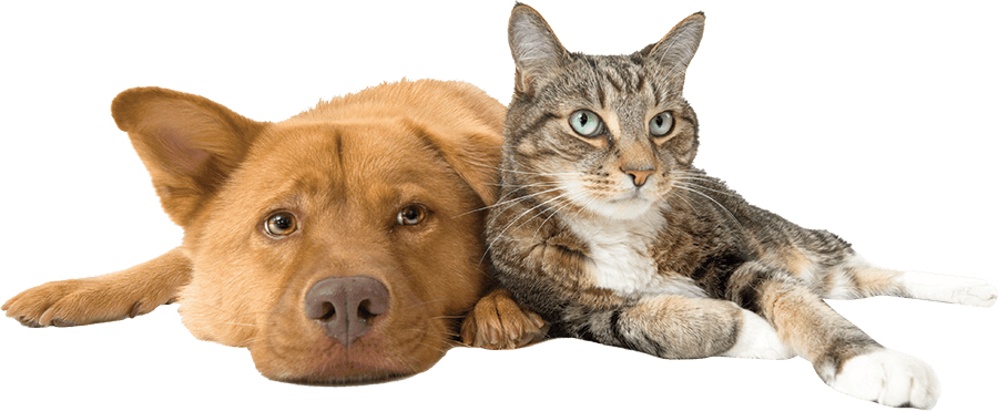 2GB Radio – Pet talk about Wee Off