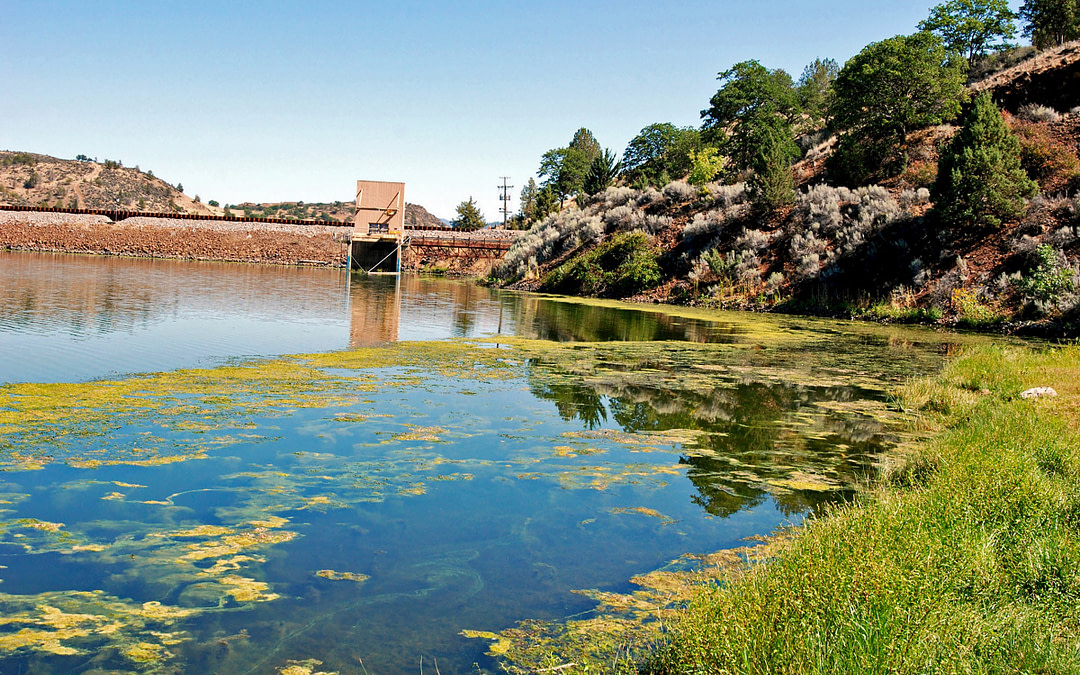 How to Get Grid from Algae in Dams?
